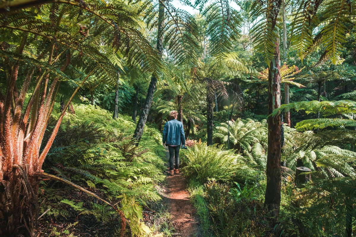 Walking in fern gully, Mount Lofty Botanic Garden, Crafers, Adelaide Hills, South Australia