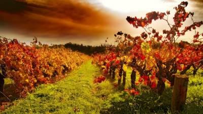 b2ap3_thumbnail_autumn-barossa-vines_20140414-132119_1.jpg
