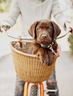 b2ap3_thumbnail_pet-friendly-pup-in-basket.jpg