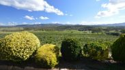 Sancerre Estate, Granite Belt