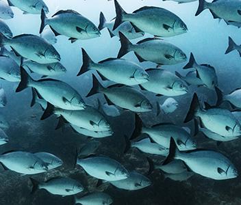 FISH TALES WALL STORIES