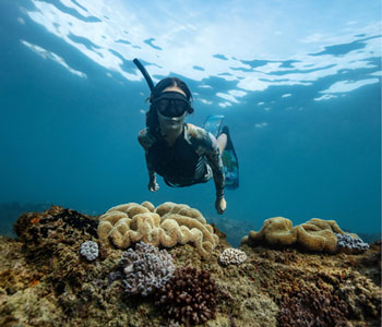 EXPLORE OUR REEF WITHIN REACH