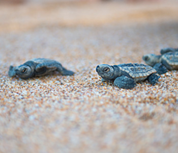 TURTLE SEASON: WHAT TO EXPECT