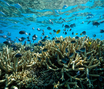 DISCOVER THE SOUTHERN GREAT BARRIER REEF
