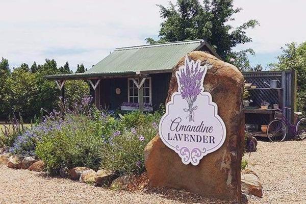 Amandine Lavender Gift Shop (Credit: Amandine Lavender)