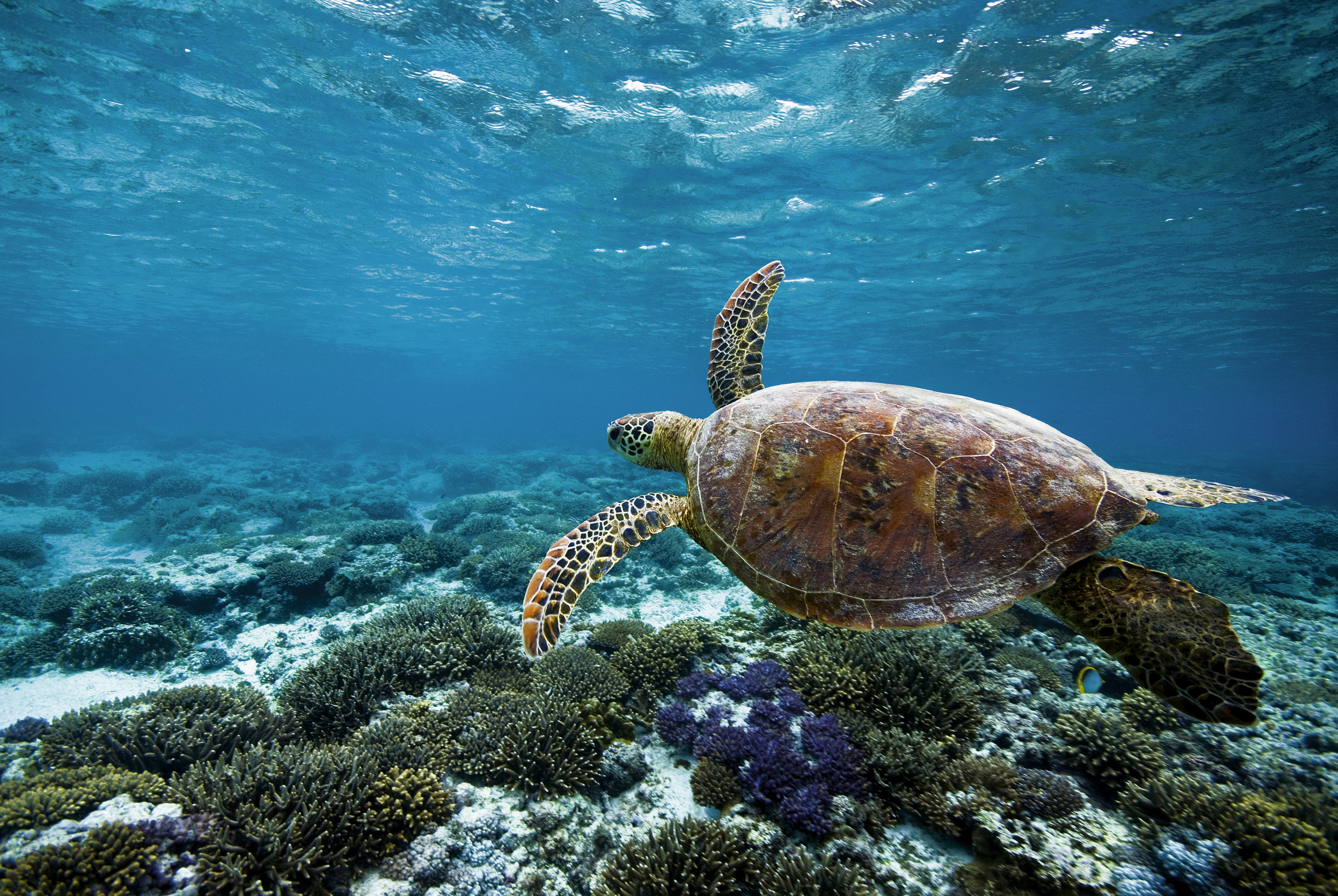 7 Ways To Experience Turtles In The Bundaberg Region