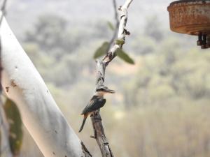 The Bird Brunch