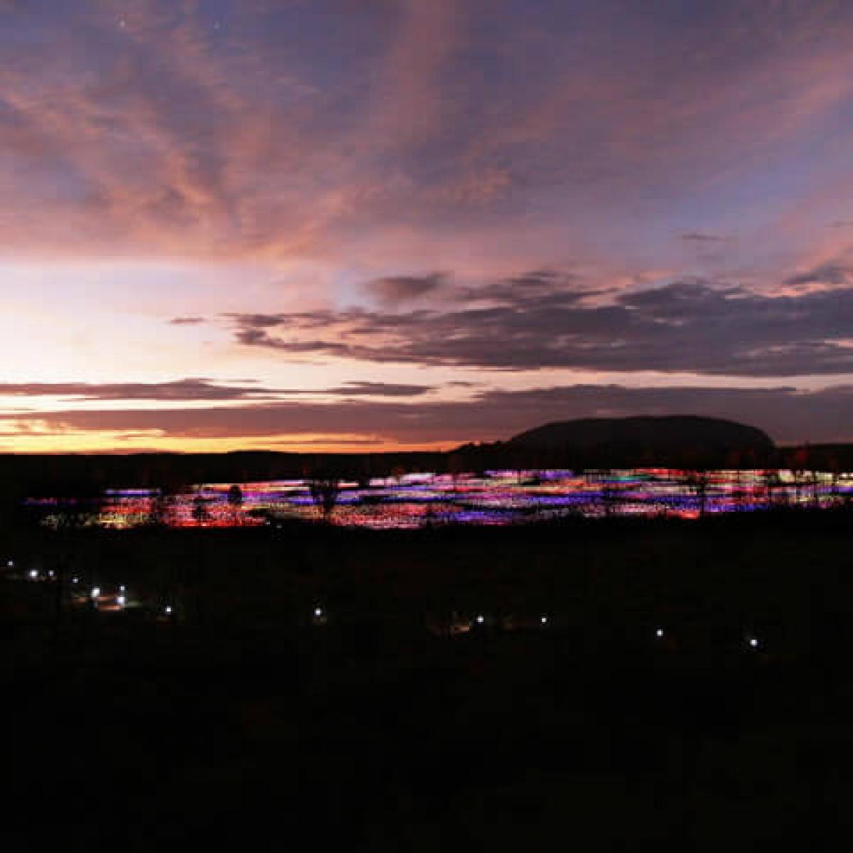 Field Of Light Uluru  Experiences