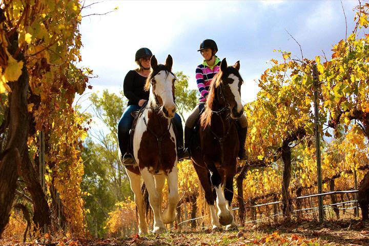 Billabong Ranch Adventure Park & Trail Rides