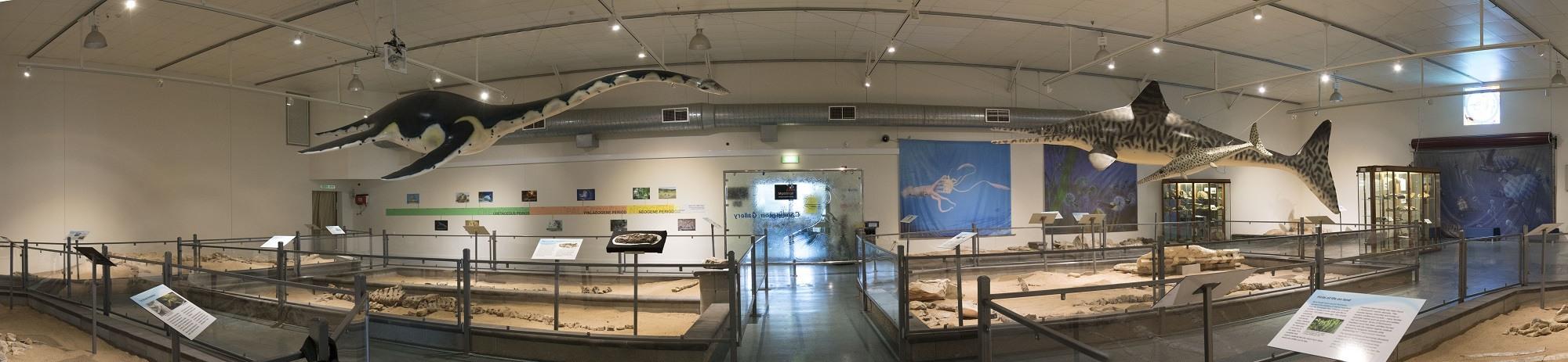 Banner - Museum