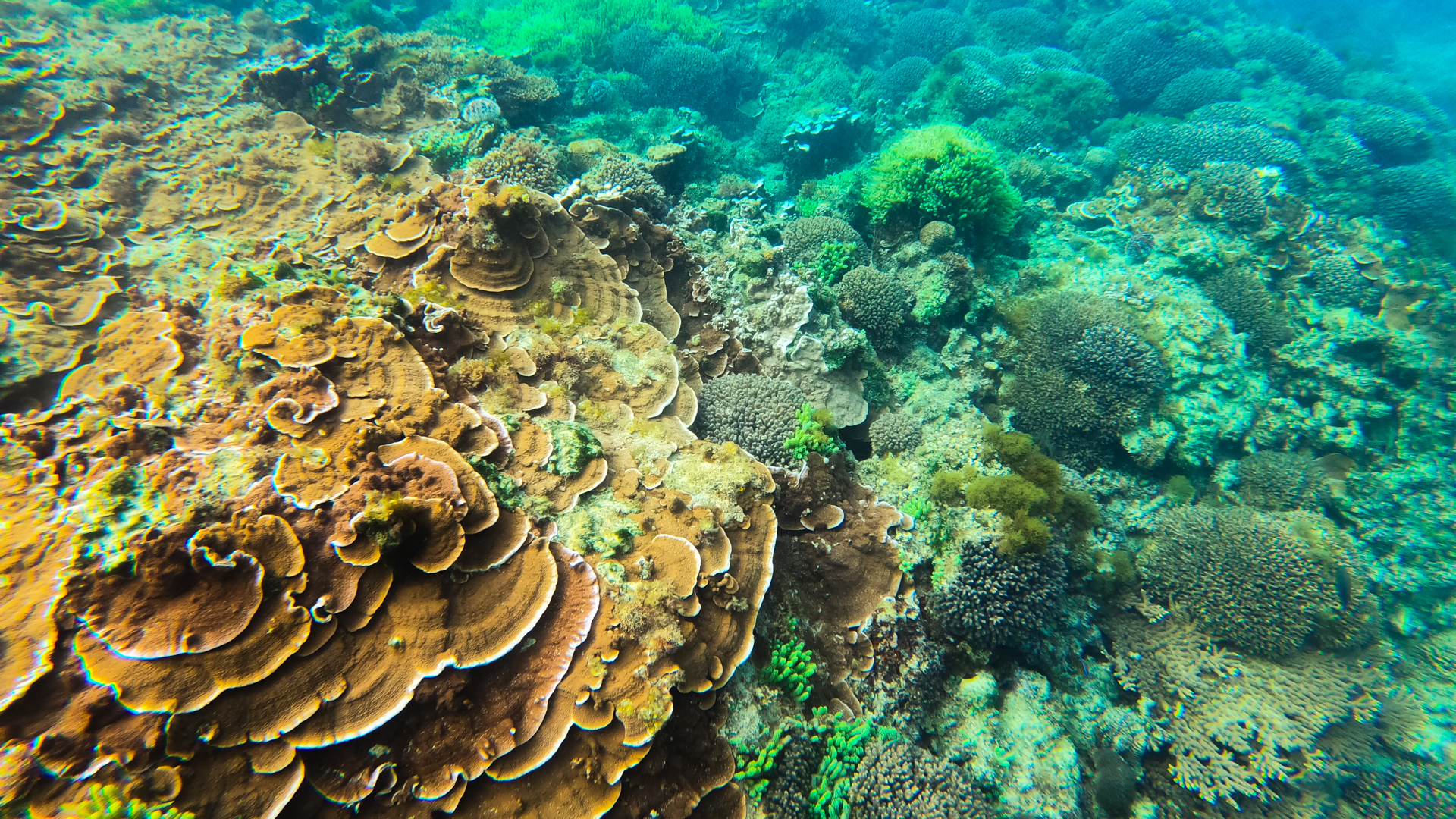 Underwater photograph of corals and plants.