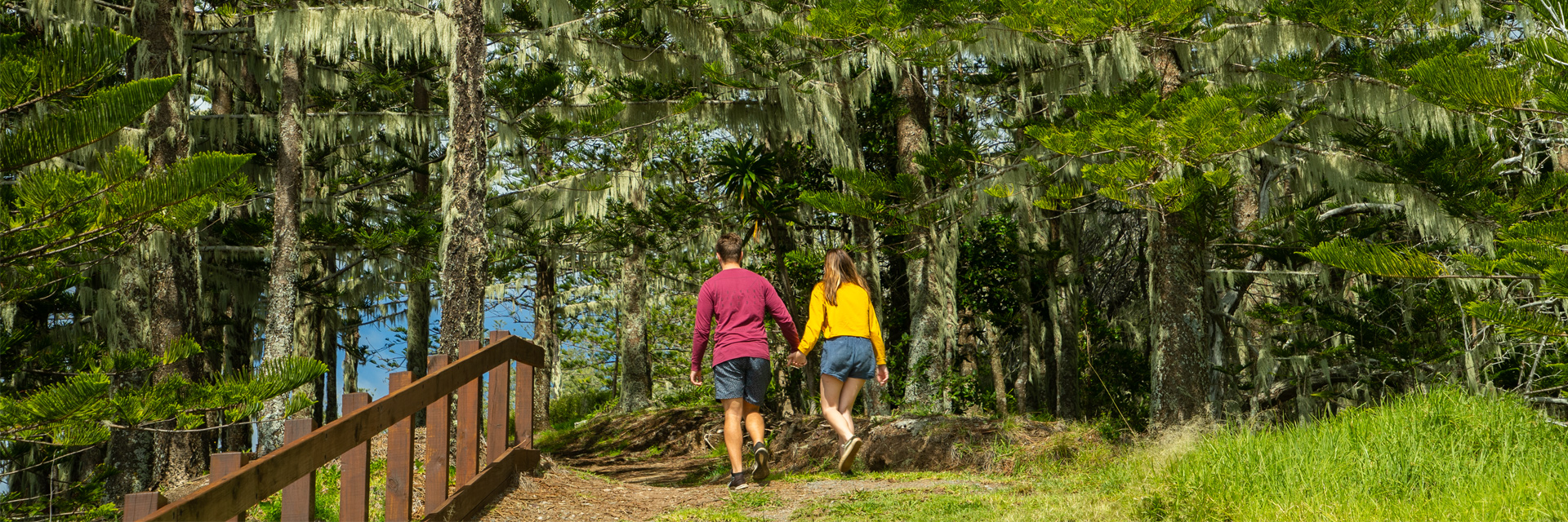Back view of young man and woman walking side by side on a track through Norfolk pines. They are holding hands. The man'