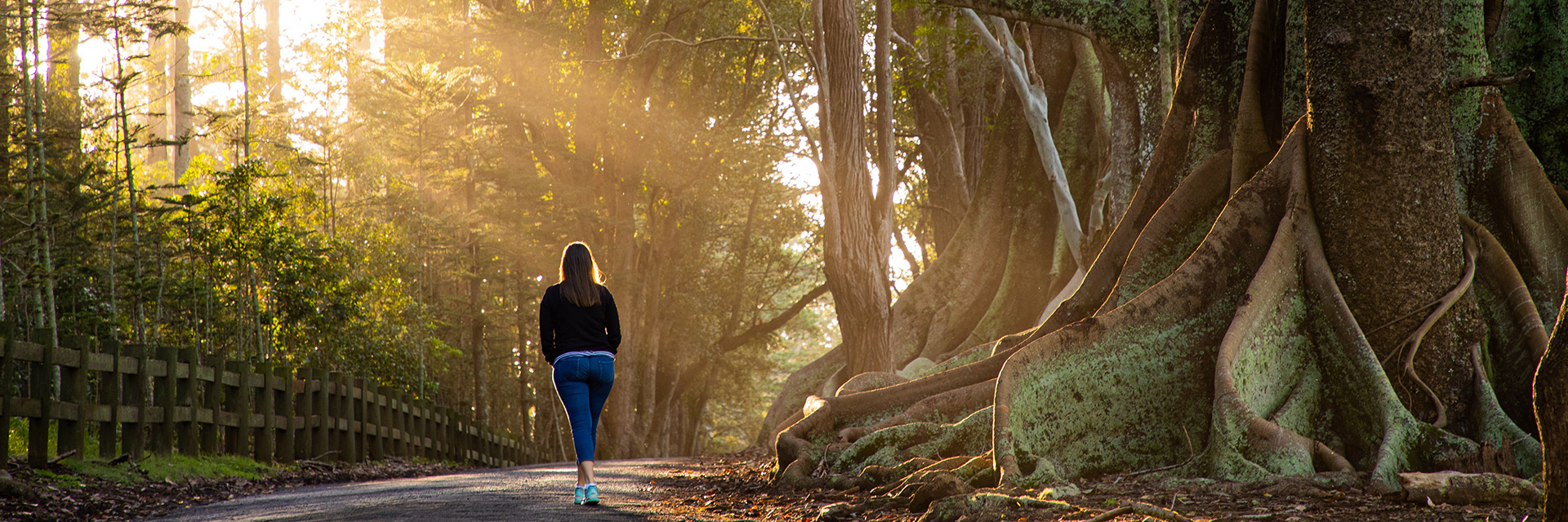 Female walks along paved path next to the large, lichen-covered roots of Moreton Bay fig trees.
