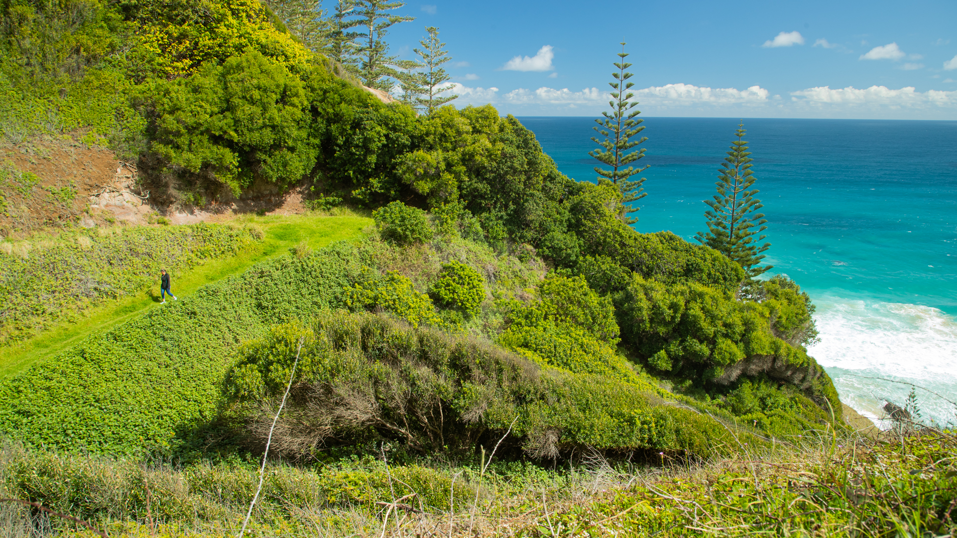 A small figure walking down a grassy slope with Norfolk Pines in the background and vast blue ocean