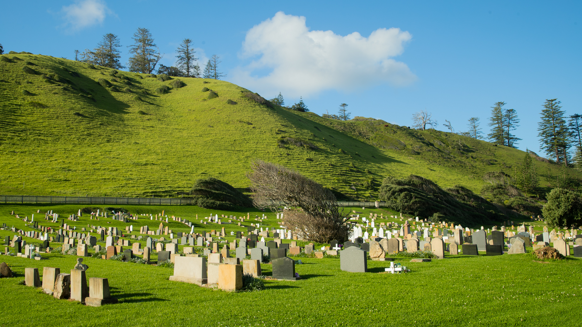 View of the backs of scores of raised gravestone in the cemetery. A steeply sloped hill in the background with the tops of pine trees visible form the other side.