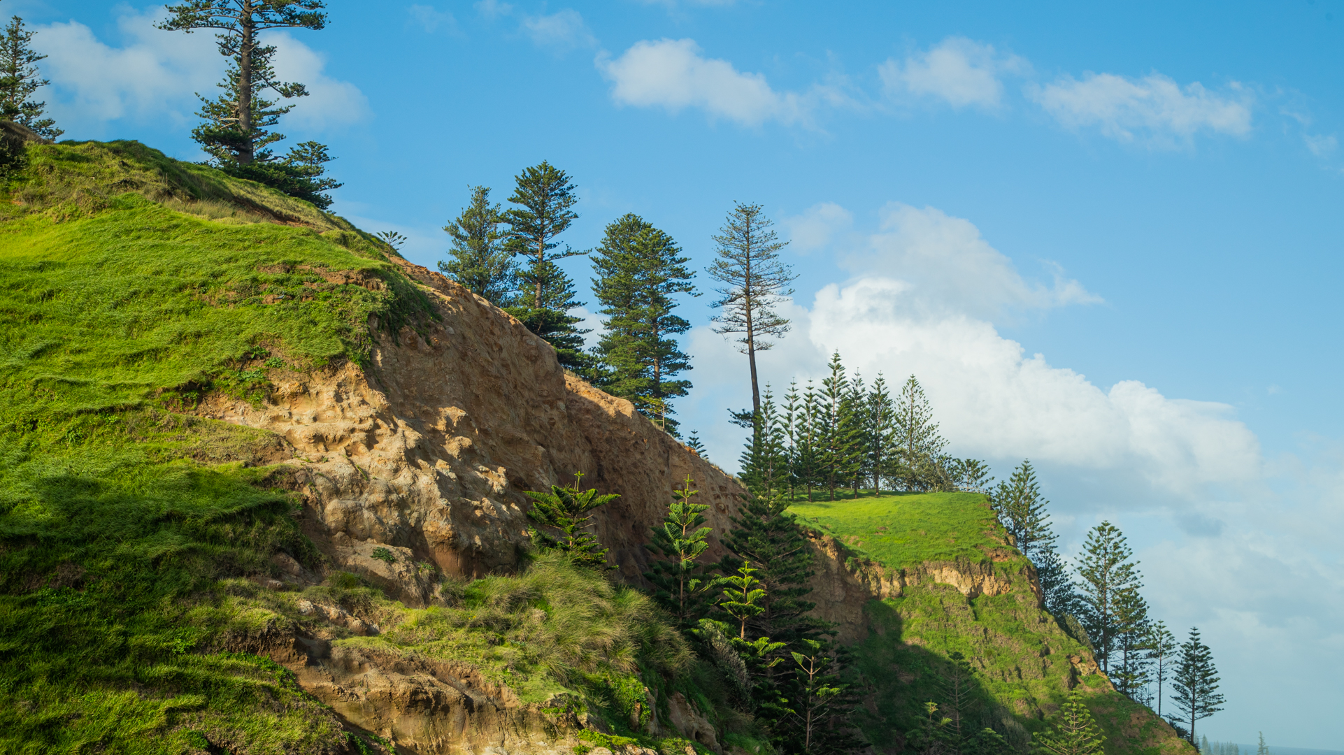 Side-on view looking slightly up at the grass-covered cliffside. Norfolk pine trees grow on the cliff, stretching high into the blue sky.