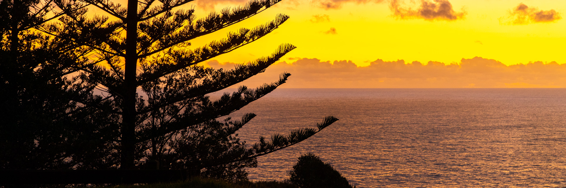 A view of the ocean's horizon at dusk. Behind the silhouette of a Norfolk pine tree, the golden sky illuminates the wate