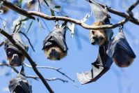 Flying Fox Discovery Tours