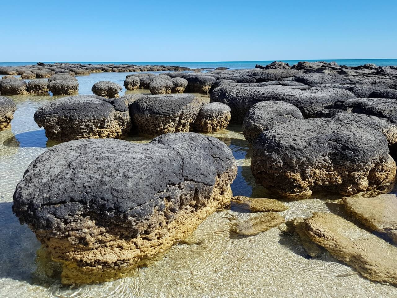 stromatolites-shark-bay