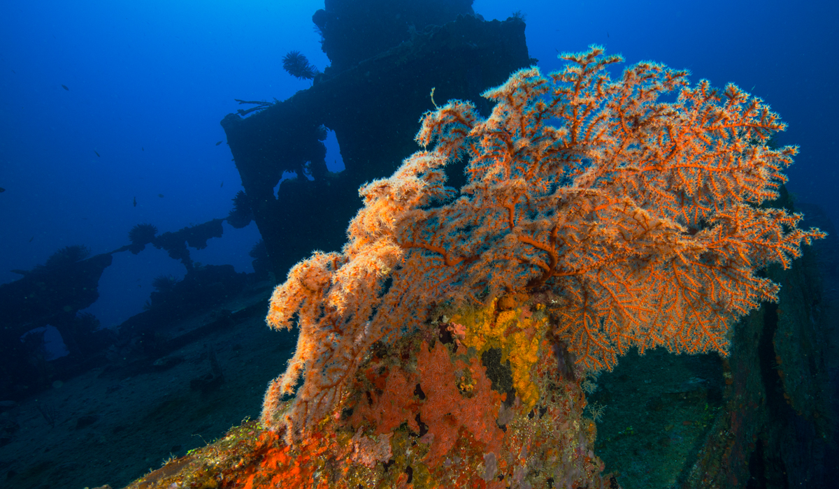 DIving guide 4 days Efate image 5