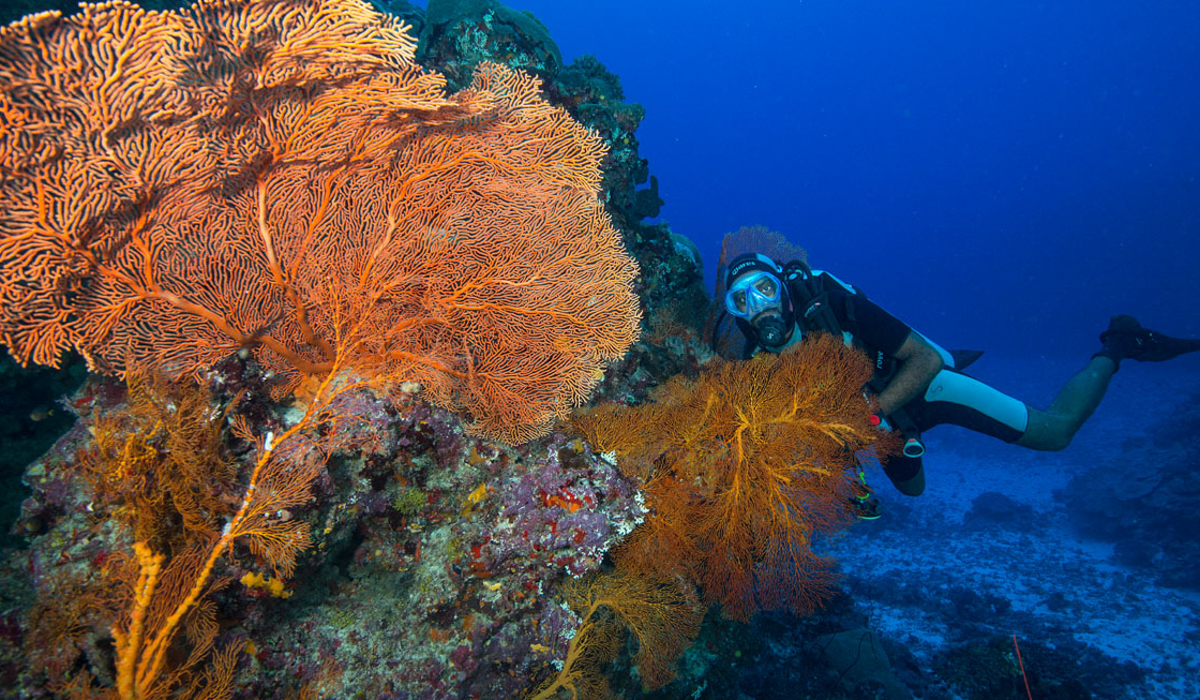 DIving guide 4 days Efate image 6