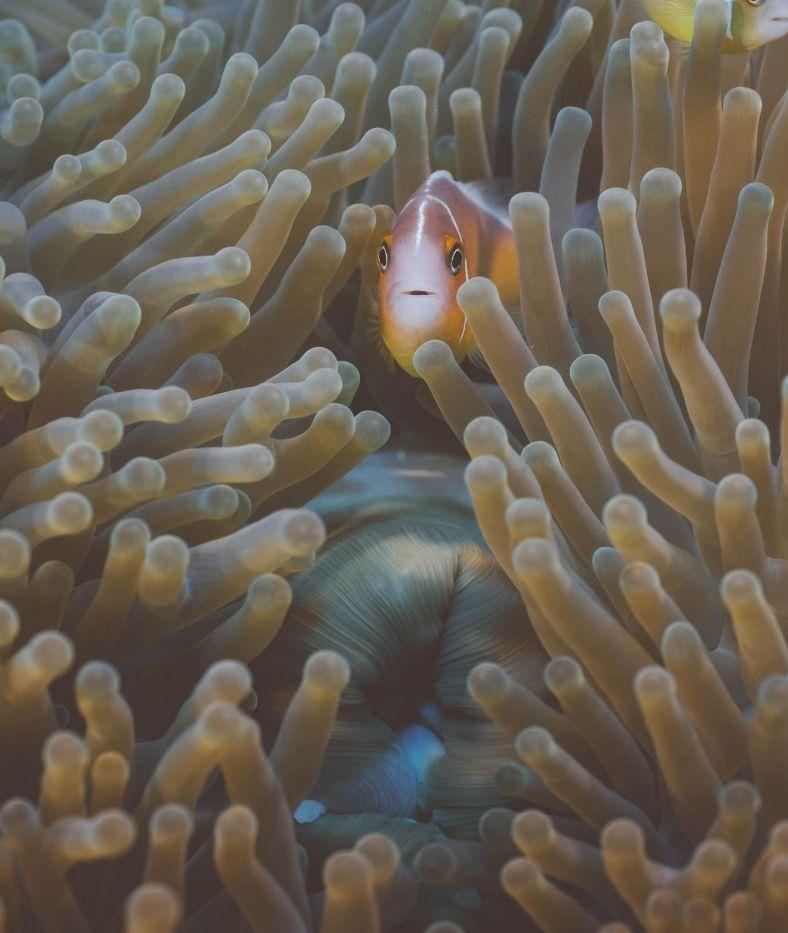Top dives in Vanuatu