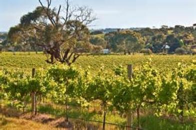 Fleurieu Hills Vineyards