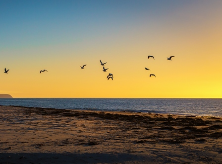 Normanville Beach seagulls