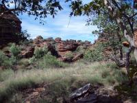 Wild Walks | Ord Valley Muster