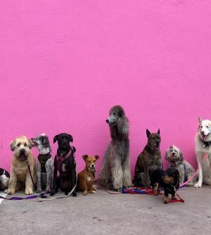 Splash! Festival of Dog, Mandurah Performing Art's Centre School Holidays Program