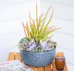 Succulent Bowl Workshop