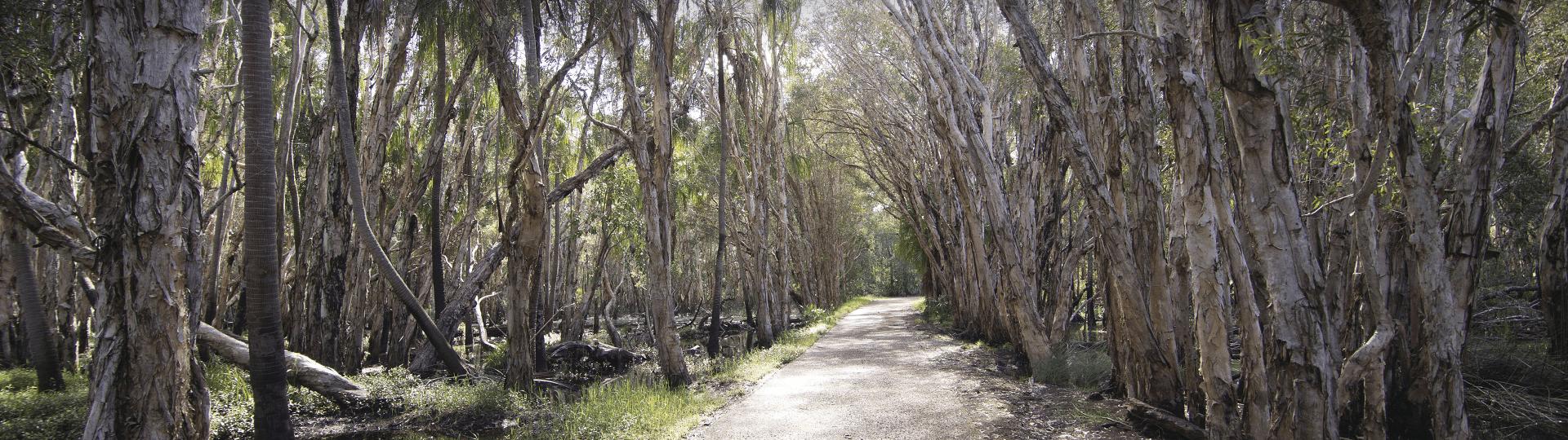 Paper Bark trail near Gladstone
