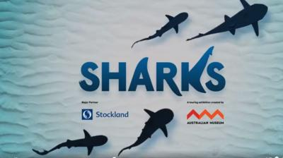 Sharks - Pop Up Exhibition@ Stockland Shellharbour