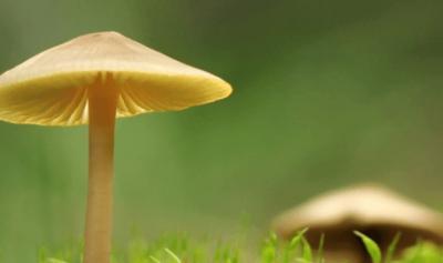 Mushroom Encounters @ Shellharbour Civic Centre