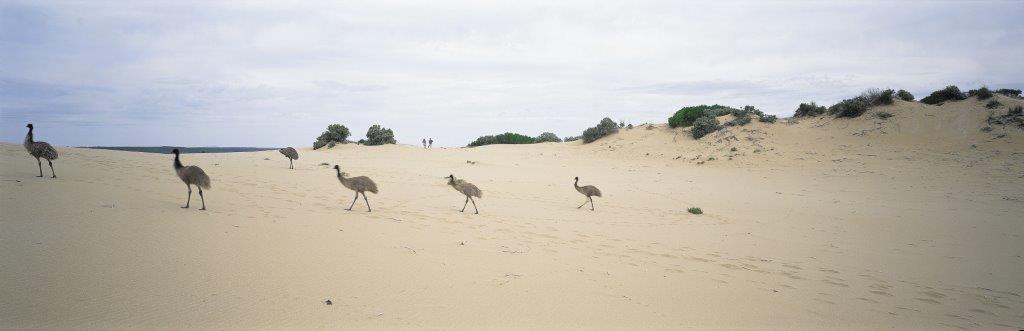 Homepage gallery emus