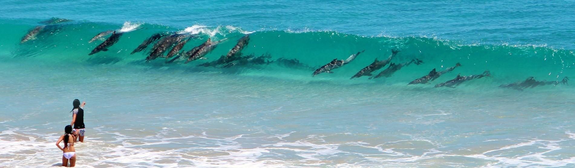 Lochie's dolphins in surf