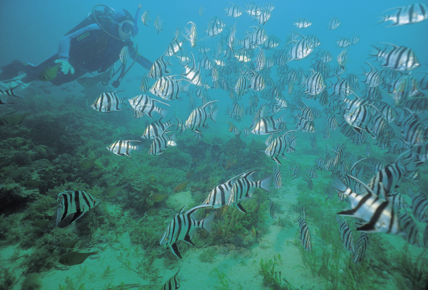 diving with school of fish