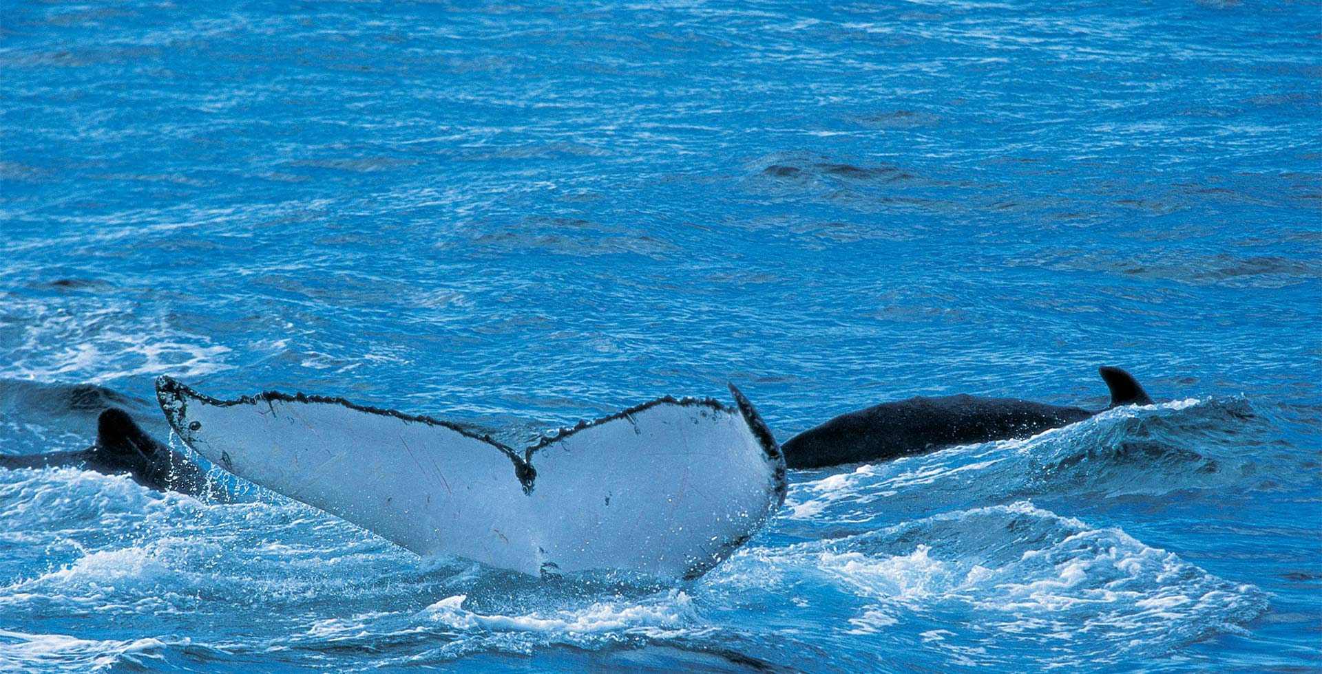 Visit Flinders Bay in Augusta and catch a view of the Whales!