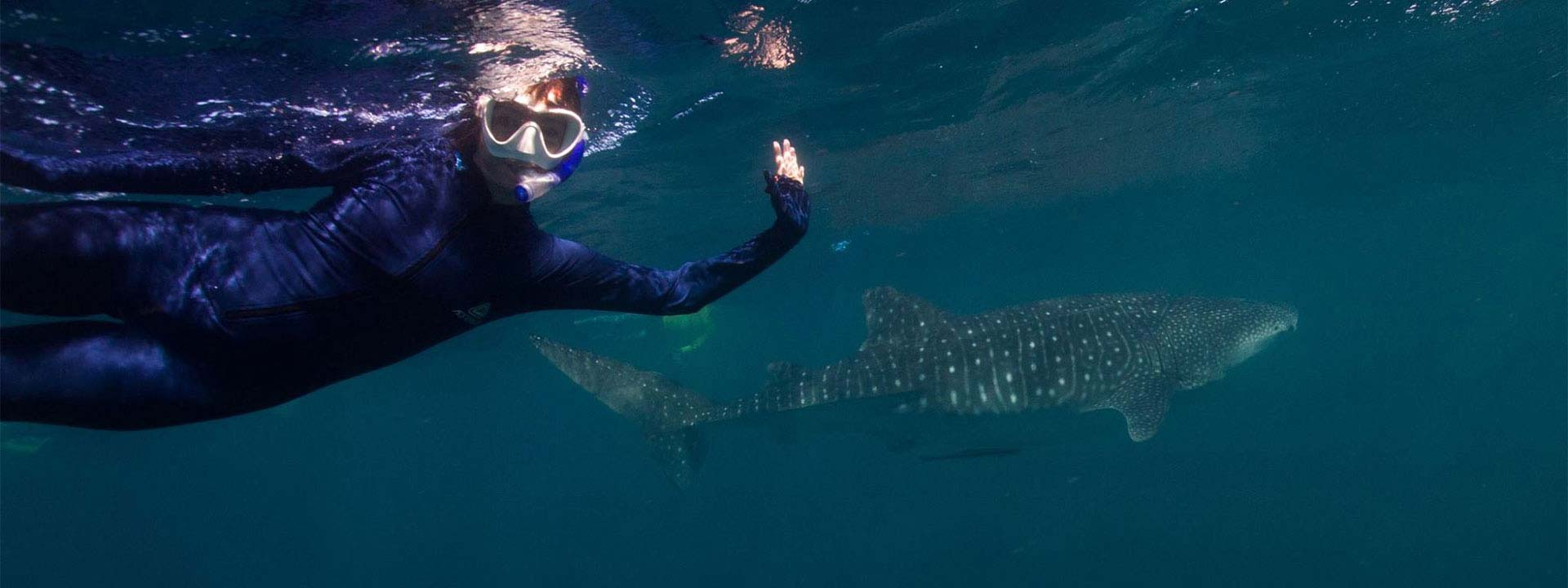 Experience diving with whale sharks