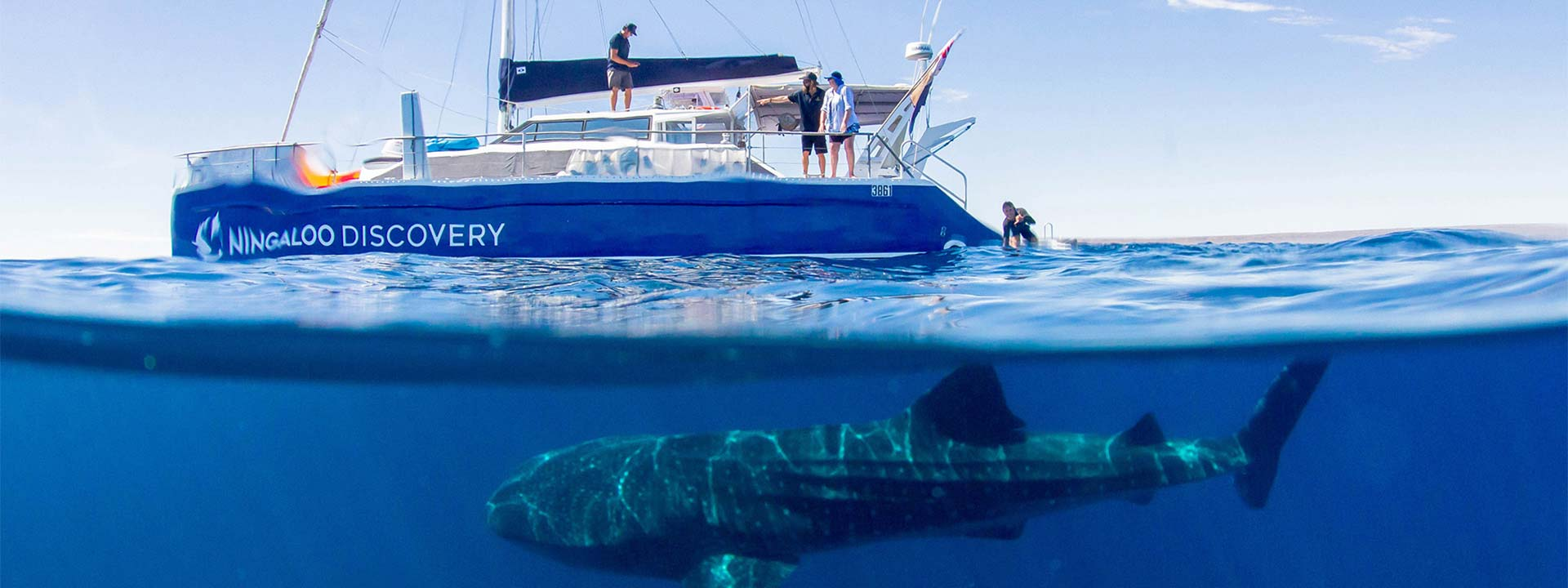 Join Ningaloo Discovery for a once in a lifetime experience