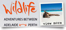 Tours From Perth