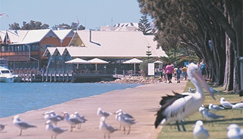 Mandurah Pet Friendly