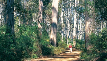 Manjimup Backpackers & Budget