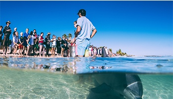 Shark Bay Backpackers & Budget