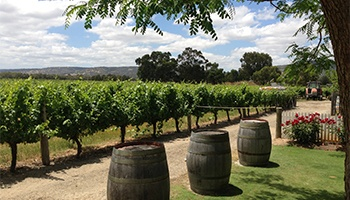 Swan Valley Tours & Things To Do