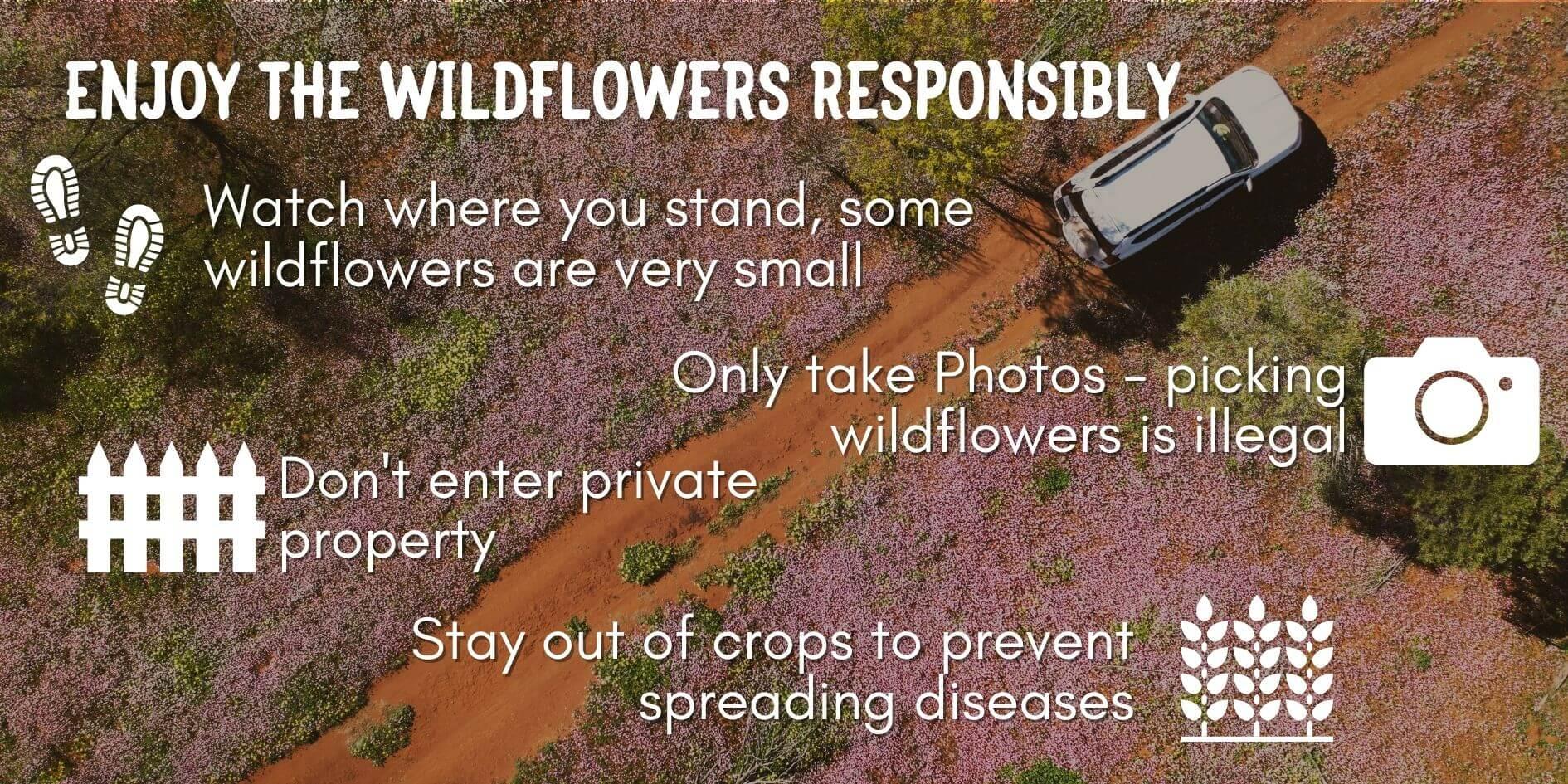How to Enjoy WA Wildflowers responsibly