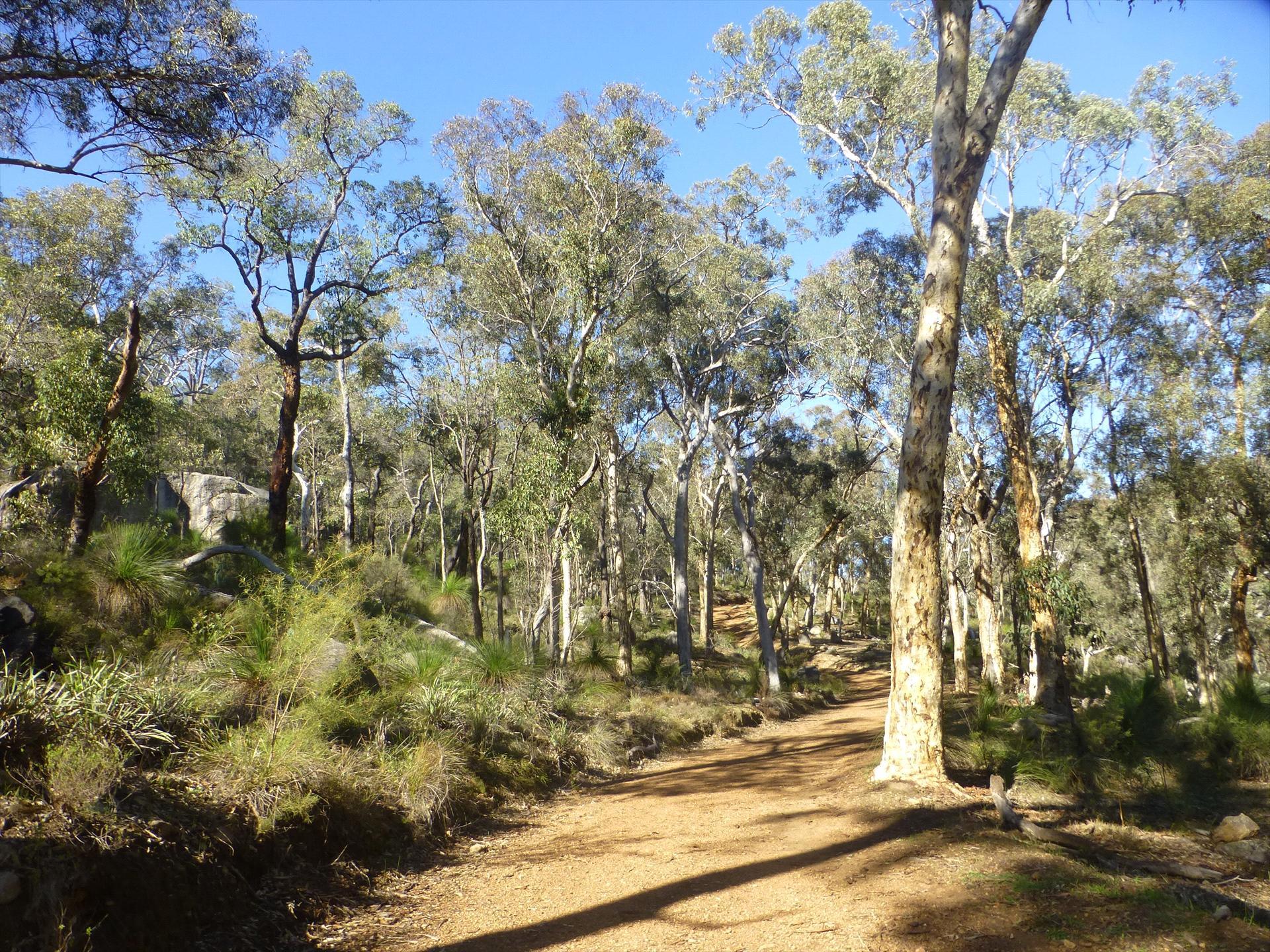 Aussie Bush Walks