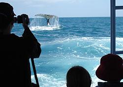 Ningaloo Glass Bottom Boat