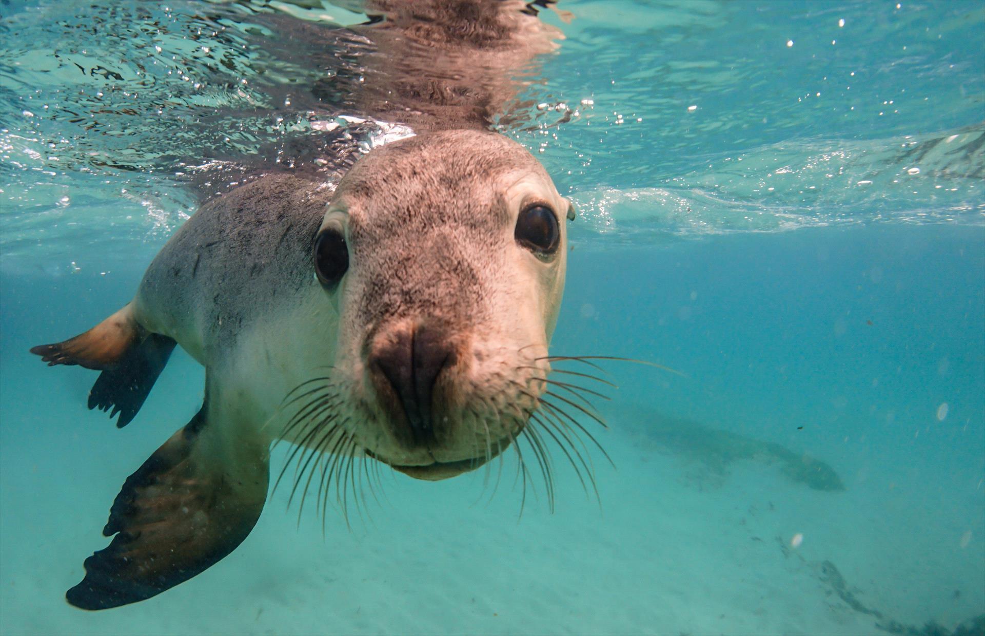Turquoise Safaris / Sea Lion Charters
